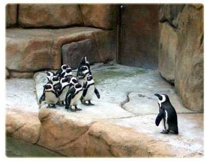 Challenging Behaviour after Brain Injury Photograph of 1 large penguin facing a group of penguins