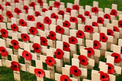 Remembrance traumatic brain injury in soldiers. Small white crosses with red poppies in the centre of each one