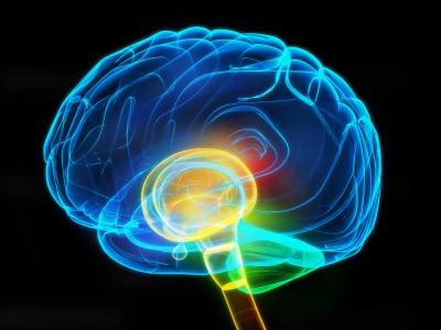 Brain Image courtesy of DreamDesigns FreeDigitalPhotosnet