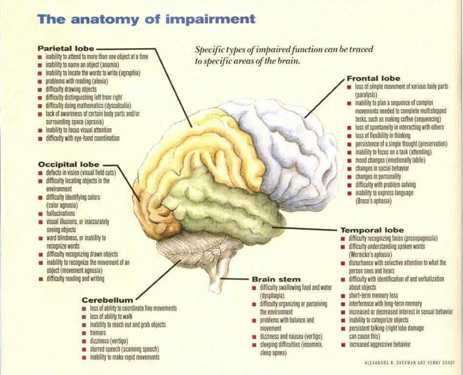 Brain Parts Diagram And Functions - Complete Wiring Diagrams •