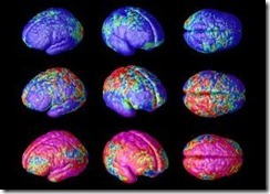 The Brain user manual