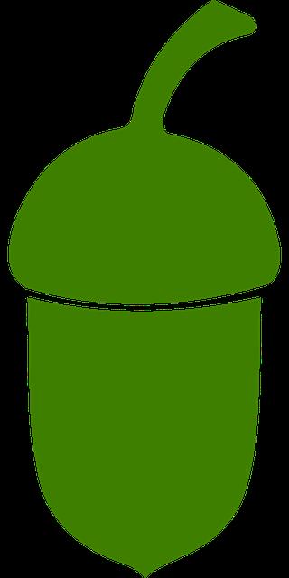 Challenging Behaviour ACORN drawing of a green acorn